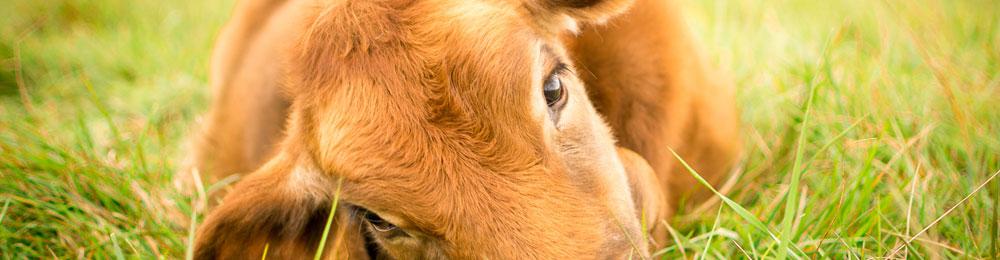 vegan-pratique.fr - Vegan pour les animaux